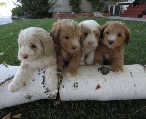 Brandi Pups on log  2 6.20.15